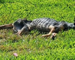 Family Couldn't Afford To Feed Their Dog Anymore, So He Wasted Away To His Bones
