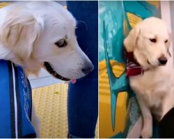 Hard-Working Service Dog Doesn't Fit In, Won't Play Till He Met Kindred Spirit