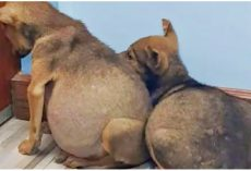 Swollen Bellied Pups Clung To One Another & Fearfully Stared At A Wall