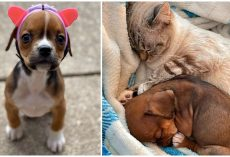 Special Needs Pup Wears Helmet That Helps Her Fit In With Her Kitty Best Friends