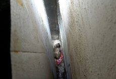 Cat Falls 20 Ft Between 2 Walls, Almost To Her Death, & Prays Someone Will Save Her