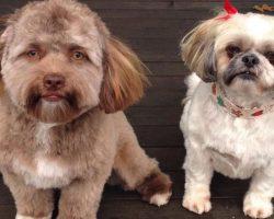 Meet Yogi, The Dog With The Uncanny 'Human Face'