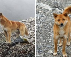 Ancient Breed Of Singing Dog Spotted In Wild For First Time In 50 Years