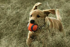 The 10 Best Dog Toys, According to Our Fans
