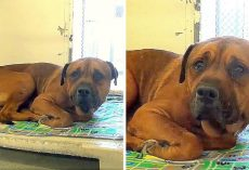 Dog Finds Out He Has Been Dumped At A Shelter And Real Tears Flow From His Eyes