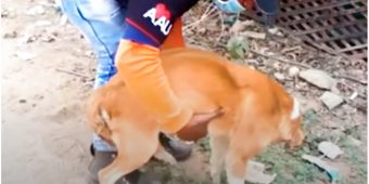 Baby Stuck In Dog's Birth Canal Nearly Kills Her, Man Raced To Deliver The Rest