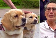 Elderly Man Dying Of Cancer Breaks Down While Saying Final Goodbye To His Dogs