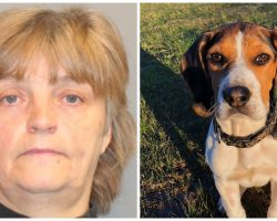 She Threw Her Helpless Beagle From A Moving Vehicle & Reported The Dog Lost