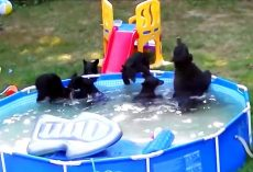 Family Was Planning On Using The Pool, But They Found It Was Already Occupied