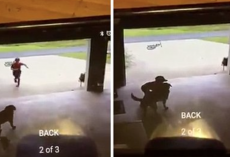Little Boy Sneaks Into Neighbor's Garage Every Day, Hugs Dog And Runs Away