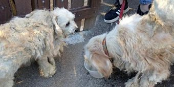 Disheveled Dogs Confided In Each Other After They Were Kicked Out Onto The Street