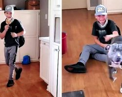 Boy Comes Home From School And Sees His Missing Dog Waiting For Him Inside