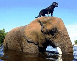 Orphaned Elephant Didn't Have A Single Friend, Then A Dog Climbed On Her Head