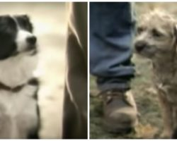 Budweiser Scores Touchdown With Classic Dog Commercial