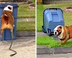 Bulldog Is Obsessed With Running Up And Knocking Over Every Trashcan He Sees