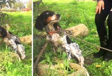 Instead Of Rescuing An Abandoned Dog, They Tied Her To A Tree & Left Her To Die