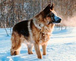 Dog Keeps Barking During Walk, Owner Follows Him To Frozen Pond And Shrieks