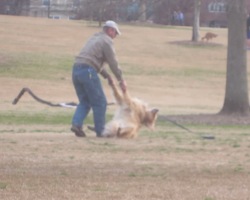 Dog Gives Owner A Hard Time When Trying To Leave The Park