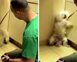 Dog Was Going To Be Put Down, So She Backed Herself Into A Corner And Cried