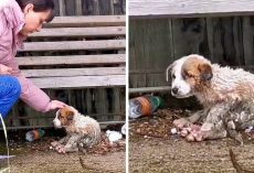 Woman Tried Her Best To Save Dying Puppy, But Puppy Said Goodbye With Sad Eyes