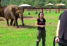 "Elephant Barges In On Interview To ""Save"" Her Caretaker From The Interviewers"