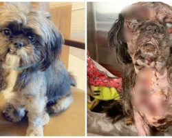 Service Dog Found Shaking & Screaming In Pain After Owner Turns Back For Moments