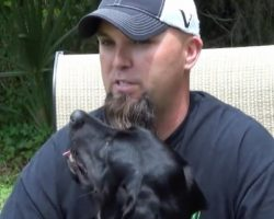 Service Dog Calms Veteran With Survivor Guilt Before He Can Have A Panic Attack
