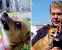 Cop Adopts Dog Whose Own Owner Tried To Break Her Neck And Brutally Murder Her