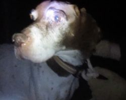 Hunting Dog Was Tied To A Tree At Night So He Couldn't Follow His Owner Home