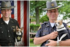 Tiny Police K-9 Dies Of A Broken Heart Just Hours After Her Handler Passes Away