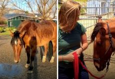 Everyone Said They Were Too Busy To Help The Horse, Until One Woman Spotted Him