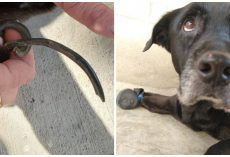 "Older Dog Cries In Pain From Walking On ""Longest Nails Our Staff Has Ever Seen"""