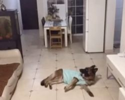 Dog Is Home Alone When Doorbell Rings, Owner Returns Later And Checks Footage