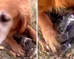 Woman Thinks Her Dog Caught Baby Birds, Then She Looks Between The Dog's Paws