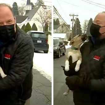 Runaway Puppy Crashes A News Report On Live TV And Becomes The Star Of The Show