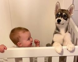 Parents Found Husky Puppy In The Baby's Crib, But That Wasn't All They Found