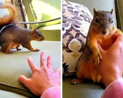Woman Play-Wrestles & Tickles A Squirrel & Makes The Squirrel Giggle And Laugh