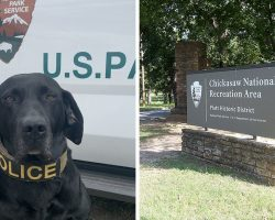 Salute This Very Good Boy Retiring after 56 Dog Years Keeping National Parks Safe