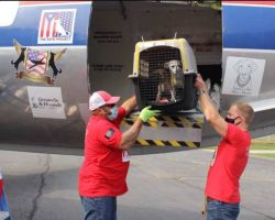 They Open The Door Of The Plane After A Long Trip And 130 Cats And Dogs Run To Their New Parents