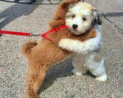 Puppy Best Friends Greet One Another With A Hug Every Time They See Each Other