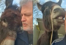 Guilty Donkey Derails Dad's Lecture With 'Puppy Eyes' And Kisses