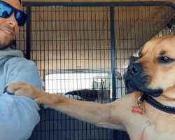 Rescue Dog Keeps Paw On New Dad At All Times To Make Sure He Won't Be Abandoned Again