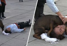 Stray Dog Interrupts Performance To Help Actor Who's Pretending To Be Injured