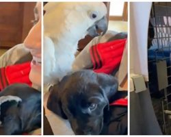"""Craig's List Parrot Rules The Internet After Telling Canine Brother """"I Love You"""""""