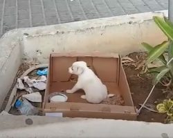 Little Pup Was Abandoned In A Box Right Outside Of A Supermarket