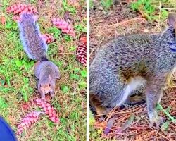 Helpless Mama Squirrel Desperately Seeks Help From Woman For Her Injured Baby