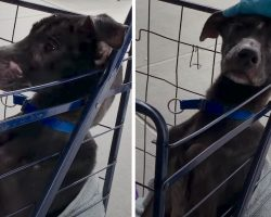 Girls Find Skinny Dog Under A Bridge, Put Him In A Cart With Some Blankets