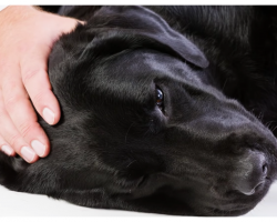 10 Warning Signs That Your Pet Needs Medical Help Right Away