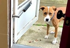 Dog Who Has Never Lived Inside Was Afraid Of Doors. His Foster Brother Transforms Him