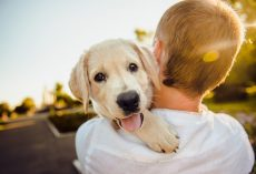 10 Reasons Why Having A Dog Is Good For Your Mental Health